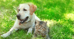 5 formas de enfrentar las alergias a las mascotas